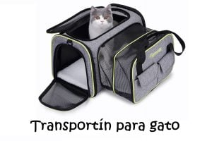 transportines gatos